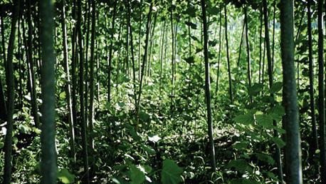 加入意大利帕尼罗生态组织协会